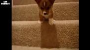 Бебе куче, което има проблеми по стълбите