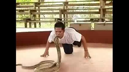 Луд човек и змия