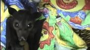 Сладко бебе прилеп