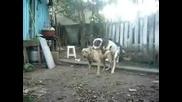 Смешни кучета