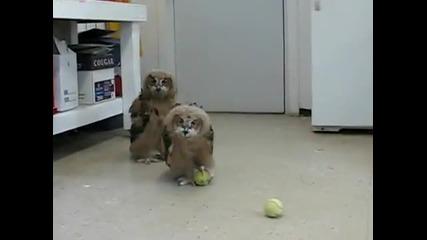 Бухали играят с топка за тенис!