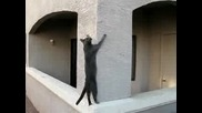 котка се катери като спайдърмен по стена :d