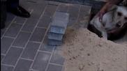 Спасяване на куче зазидано живо под улична настилка!