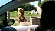 Туристи не очакваха, че мечка перфектно се справя като баскетболист