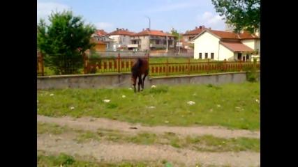 Динго и Асен Шувара - Изтървахме Коня (авторско клипче)