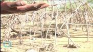 Kenya Rustlers Fined 50 Cows Per Death
