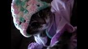 Котка По Пижама - Смях