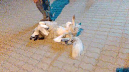 Спящо куче с вдигнати нагоре крака