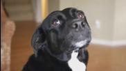 Dramatic Dog Moki