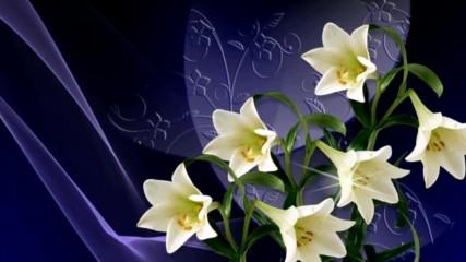 Бели лилиуми! ... ( Victor Huynh music) ...