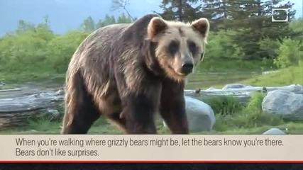 Как да оцелеем при нападение от мечка Гризли?