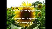 Джулия Бел - Слънчогледи