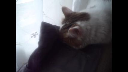 15 годишна котка