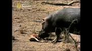 Хипопотам Спасител