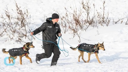 Subzero Temps, Northern Lights and Sled Dogs: The 2015 Iditarod Comes to a Close