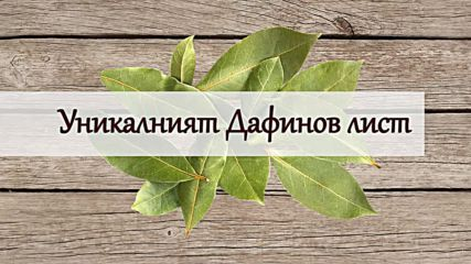 Уникалният дафинов лист
