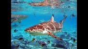 Раят на Земята о.бора Бора (intercontinental Bora Bora )