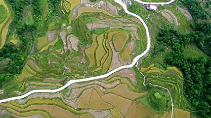 China: Golden harvest makes Guizhou's rice fields shine