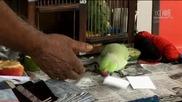 Singaporean parrot picks Holland as World Cup 2010 Champion