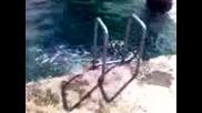 Скок От Моста В Бургас - Глава