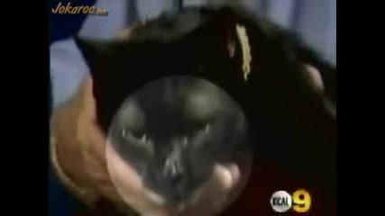 Черно Коте С Два Езика