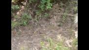 Сабин И Янтра - Разходка В Гората