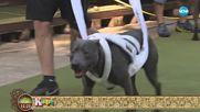 """""""На кафе"""" отива на арената на спортни мероприятие за атлетични кучета"""