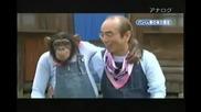 Маймуна спортува 1