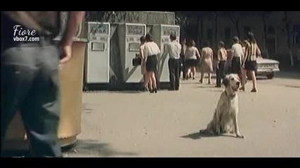 Белият Бим - Черното Ухо част 2/6 (филм 1977)