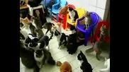 Жена Отглежда 130 Котки!