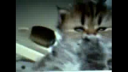 Уникалното Коте (inlove)