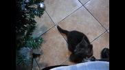 Коте под елхата