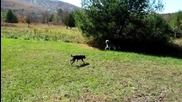 Kучетата Mishka & Мoki на планина