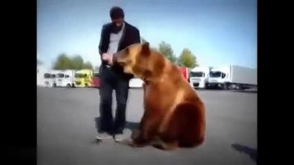 Ето какво е научил мечока Тима от руските тираджии