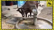 Животни, които са умни колкото човек!