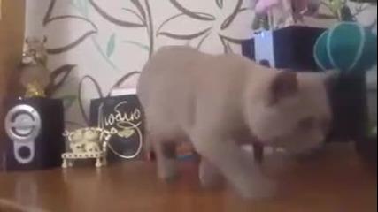Коте се опитва да улови баса от колоната :)