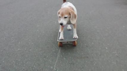 Сладко кученце кара скейтборд