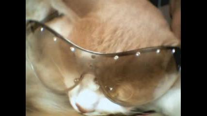 Снимки На Едно Много Сладко Котенце