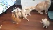 Как да избягаш от 8 котенца за секунди