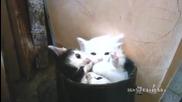 Малки котета се гушкат в стар ботуш