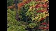 Релаксираща музика - Есенна носталгия