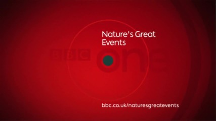 Web Extra - Whale Gulp - Nature s Great Events -