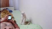 Котка - патриот