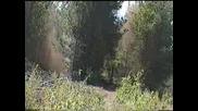Как Бутнах Едно Дърво В Гората!