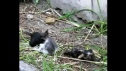 Малки Котенца Се Боричкат
