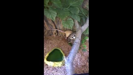 Питон Срещу Плъх!!! Rat Vs Python