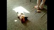 Котенце си играе