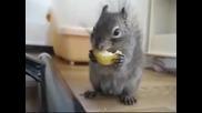 Катеричка яде лимон !