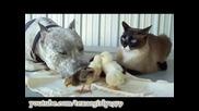 тази котка и куче са много дружелюбни ;)