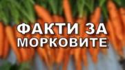 Факти за морковите